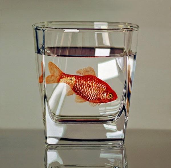 写真みたいに超リアルな金魚の絵画