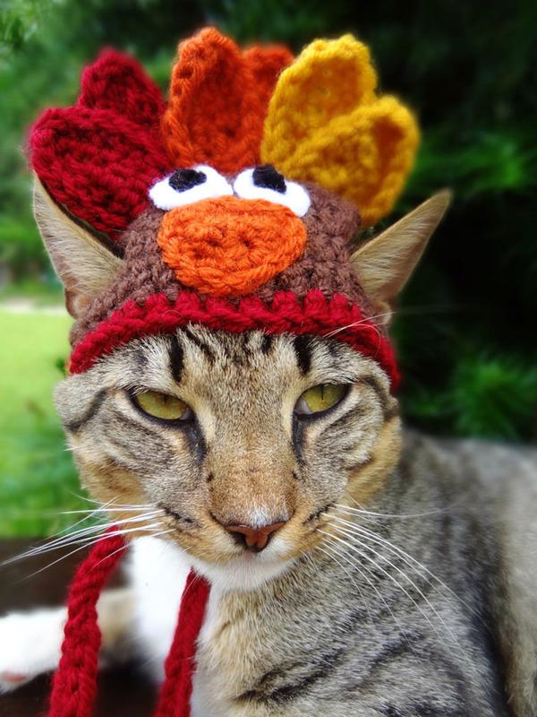 かわいさアップ?猫にぴったりなペット用ニット帽! (9)