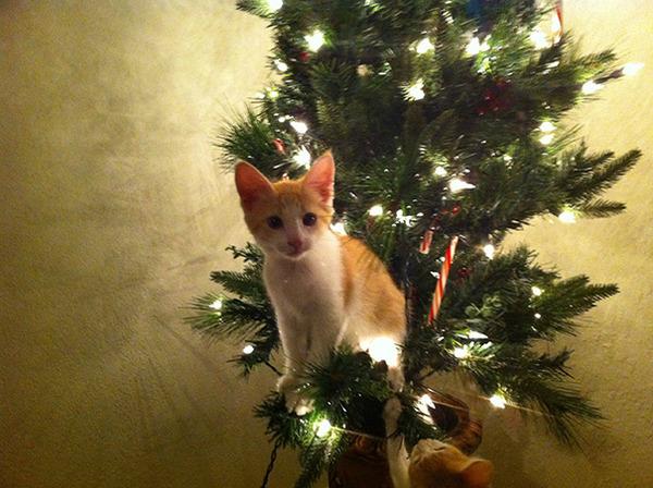 猫、あらぶる!クリスマスツリーに登る猫画像 (22)