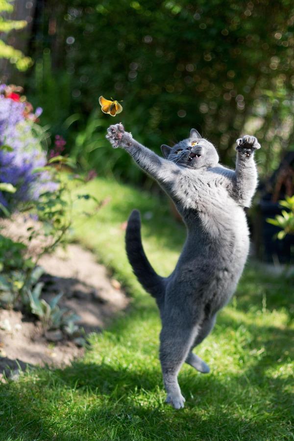 蝶と猫 5