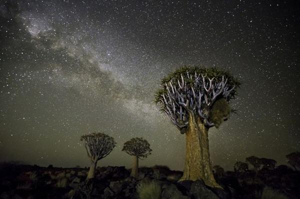 星空と古い木の美しい風景写真 5