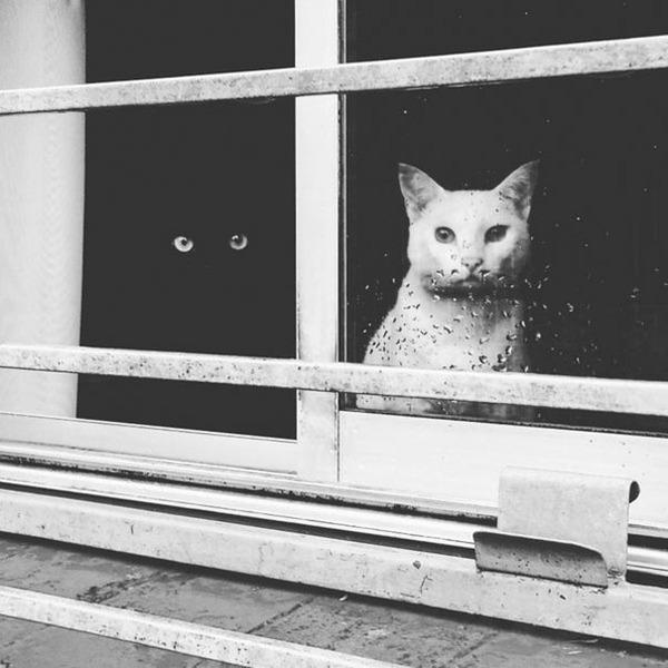 黒猫と白猫どっちが好き?どっちも可愛すぎ【猫画像】 (1)
