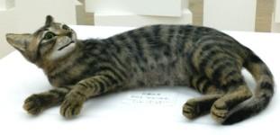 本物の猫みたい!佐藤法雪氏による羊毛フェルトのリアル猫人形