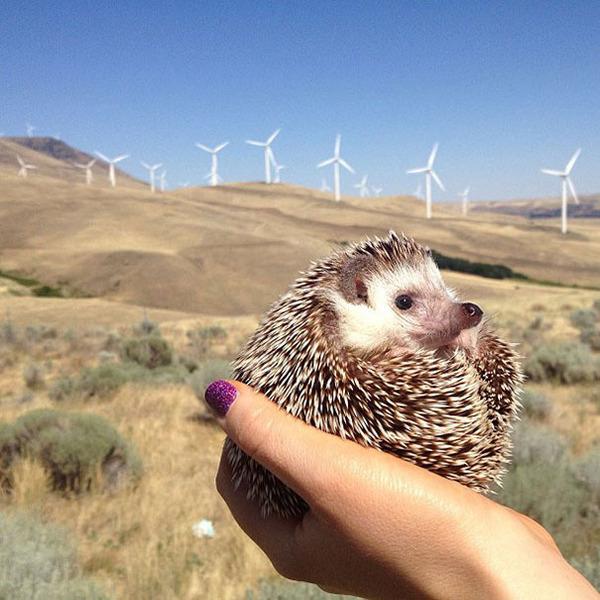 ハリネズミと風力発電