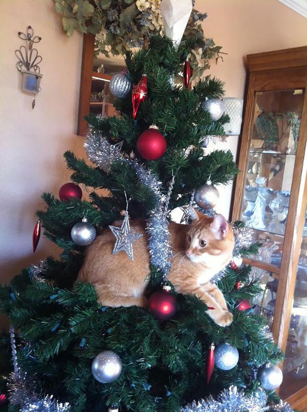 猫、あらぶる!クリスマスツリーに登る猫画像 (2)