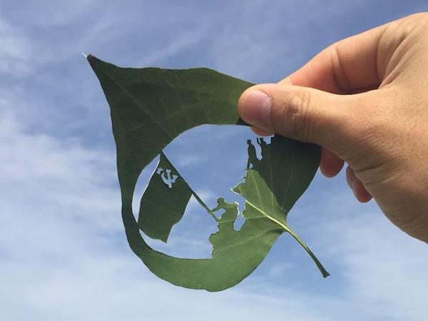 シンプルな美しさ。葉っぱの切り絵アート (1)
