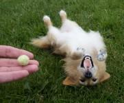 羊毛フェルトで作るリアルな犬人形!本物みたいなわんこ