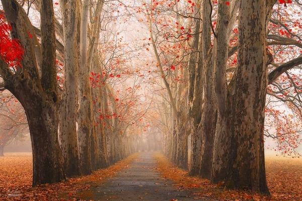 秋といえば紅葉や落葉の季節!美しすぎる秋の森の画像20枚 (3)