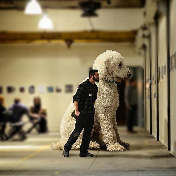 犬を大きくする!そんな夢をフォトショップの画像加工 (15)