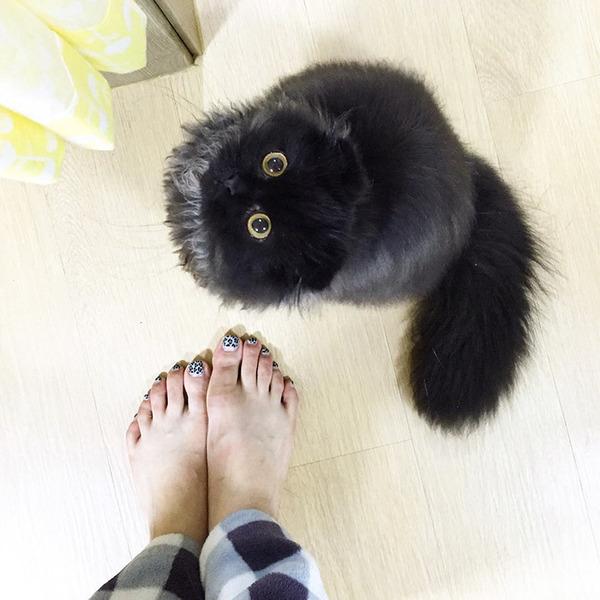 「まっくろくろすけ」みたいな黒猫画像!黒いモフモフ (11)