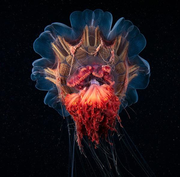 神秘的!北極圏に存在する未知の海洋生物たちの画像 (6)