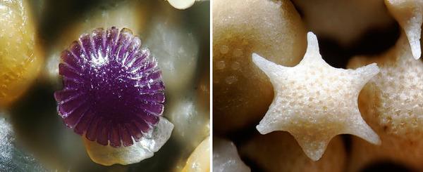 顕微鏡で見た美しいハワイの砂 4