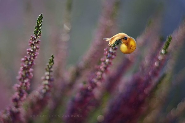メルヘンチック!カタツムリの小さな世界を激写 (2)