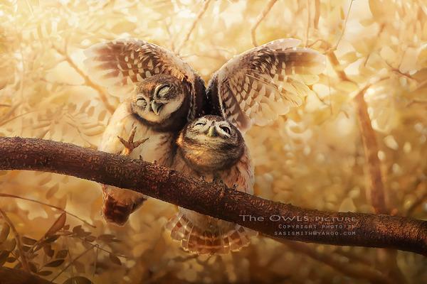 可愛いフクロウの画像 2