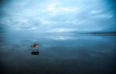 神々しい透明感。凍った湖の上を歩くシベリアンハスキー犬の写真