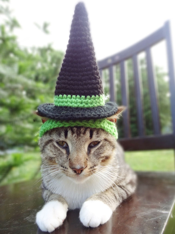 かわいさアップ?猫にぴったりなペット用ニット帽! (8)