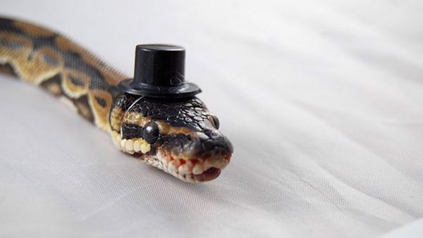 なんだこれカワイイぞ!帽子を被ったヘビ画像特集 (7)
