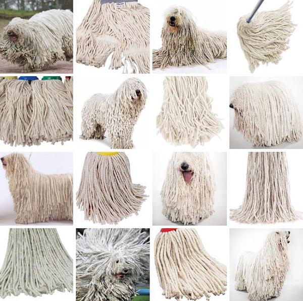 何かとそっくりな犬の比較画像 (6)