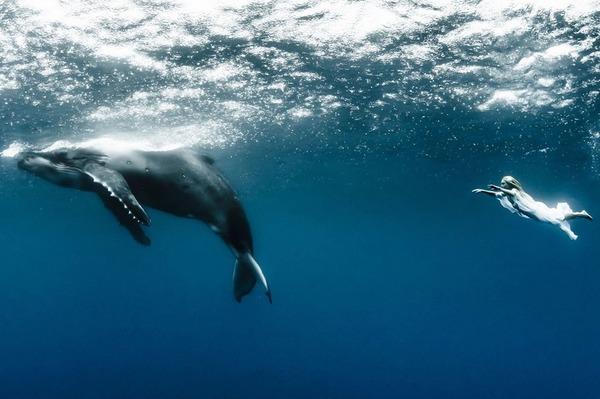 ザトウクジラとモデルのダイバーが一緒に海中を泳ぐ 5