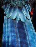 Plumage 鳥の美しい羽根!羽毛の鮮明な写真