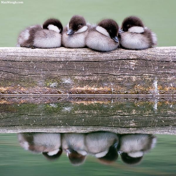 小鳥が温まる為に皆で寄り添っている可愛い画像 (6)