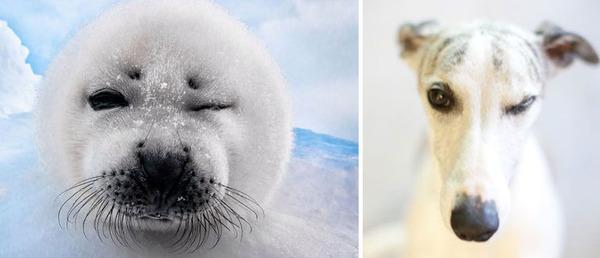 アザラシって犬そっくりじゃね?犬とアザラシを比較画像! (13)