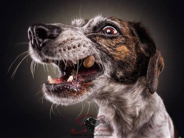 ハングリー精神!犬が獲物を食らう瞬間の静止画像がヤバイ (15)