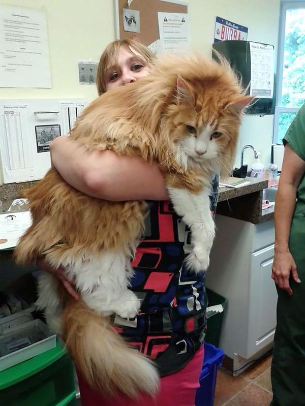 綿菓子フワフワ!モフモフしたくなる長毛種の猫画像 (40)