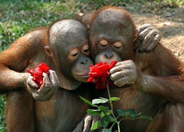 くんくん良い香り。花の匂いを嗅ぐ動物たちの画像 (46)