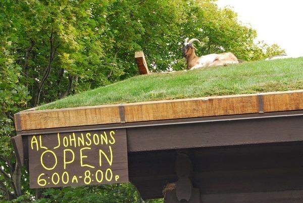 アル・ジョンソン Al Johnsons ヤギが住む料理屋 2