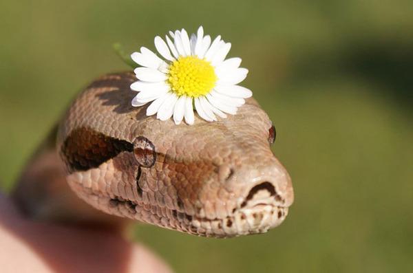 なんだこれカワイイぞ!帽子を被ったヘビ画像特集 (20)
