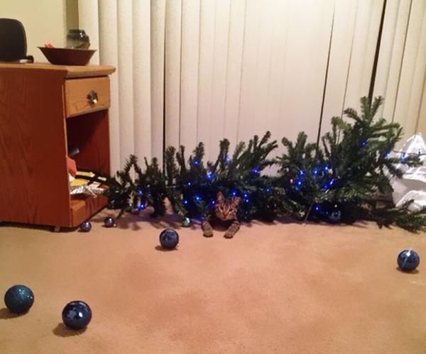 猫、あらぶる!クリスマスツリーに登る猫画像 (20)