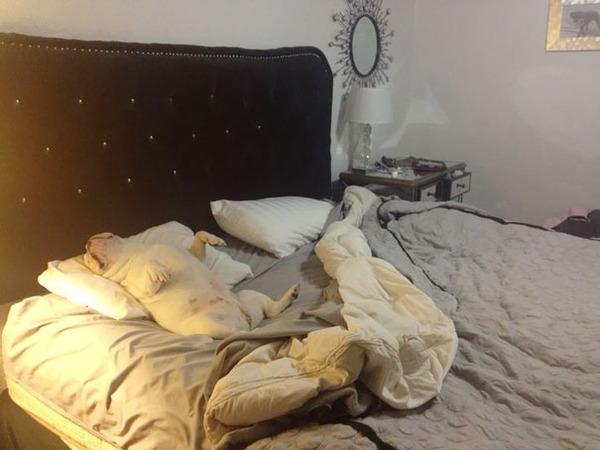ベッドで寝る犬 かわいいおもしろ画像 23