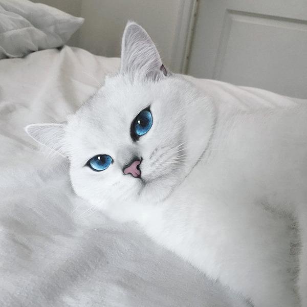 美しい…。綺麗な青い瞳をした白猫が話題!【猫画像】 (16)