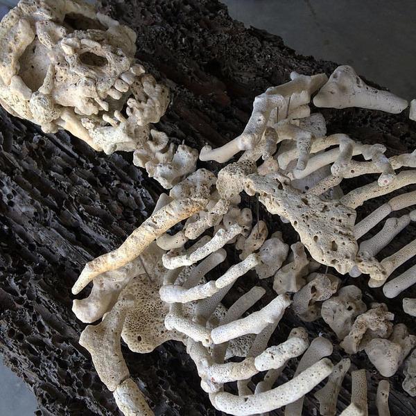 本物みたい。珊瑚の欠片で作る人体の骨格標本 (7)