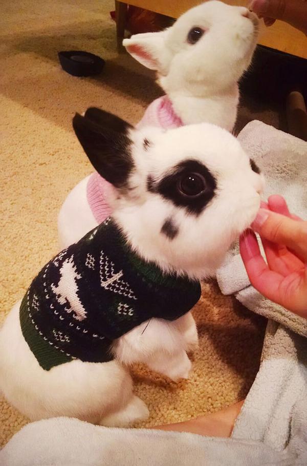 寒いからニットのセーターを小動物に着せてみた画像 (24)