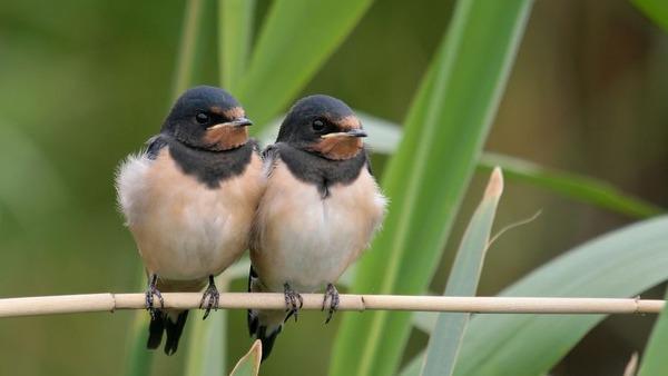 小鳥が温まる為に皆で寄り添っている可愛い画像 (17)