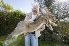3mもある世界最大のウサギ(兎)がやばい