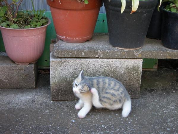 羊毛フェルトのリアル猫人形9