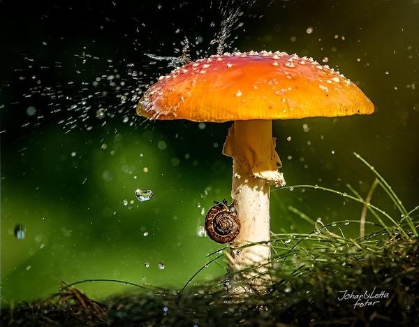 自然の傘を差す動物 10