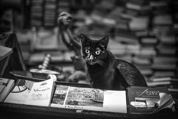Libreria Acqua Alta 2