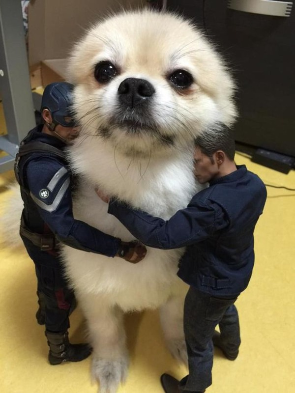 遠近感と錯覚の関係で超巨大に見える犬画像 (11)