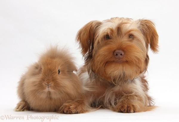 似てる!親が違うのにそっくりな動物画像30枚 (9)