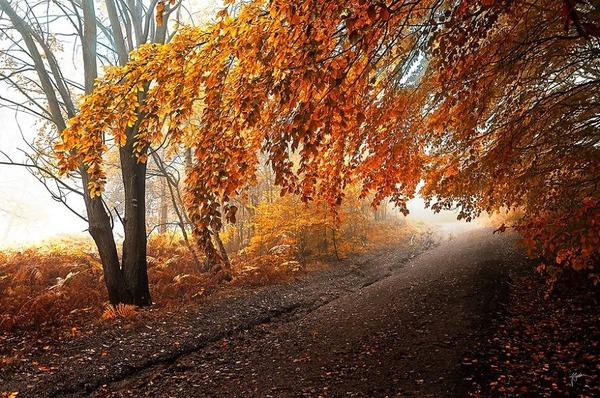 秋といえば紅葉や落葉の季節!美しすぎる秋の森の画像20枚 (18)