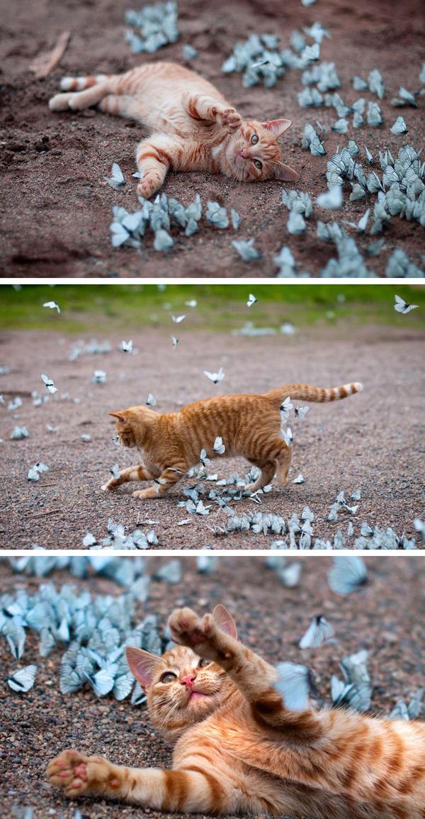 蝶と猫 2