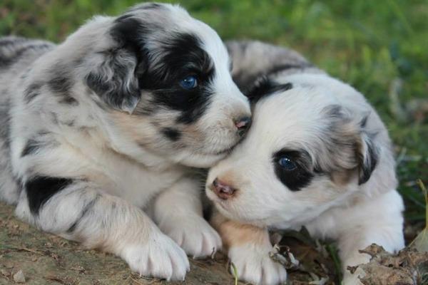 子犬のキス 10