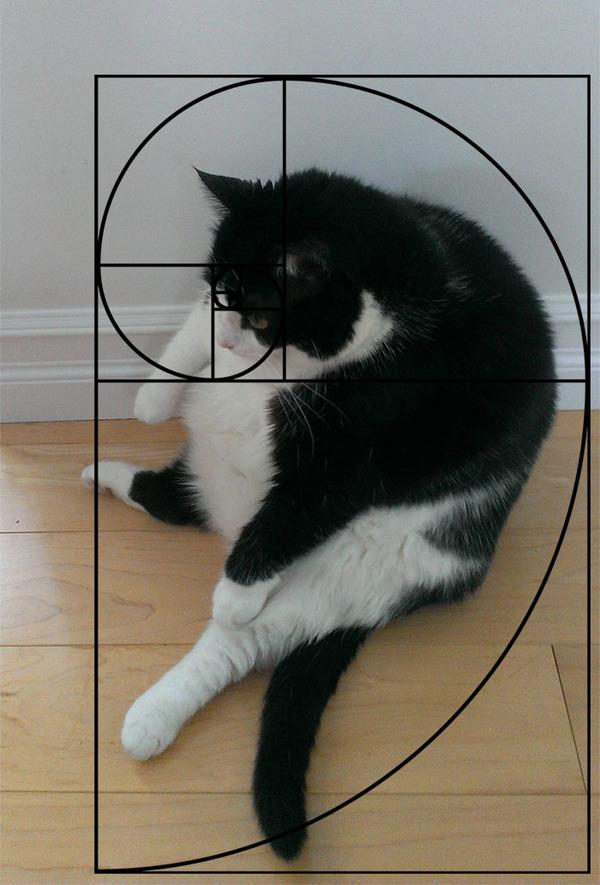 猫と黄金比の関係画像!猫の美しさの秘訣は黄金比にあり (16)