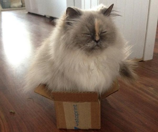 ジャストフィット猫 5