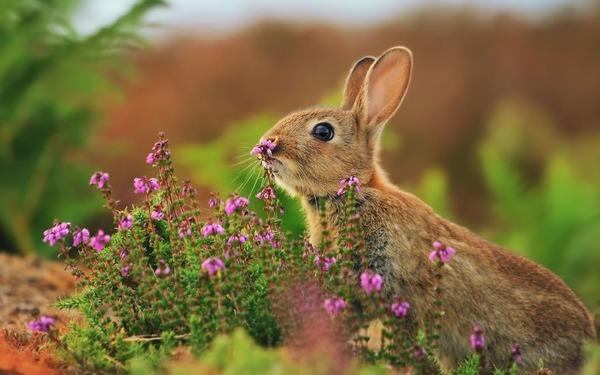 くんくん良い香り。花の匂いを嗅ぐ動物たちの画像 (7)