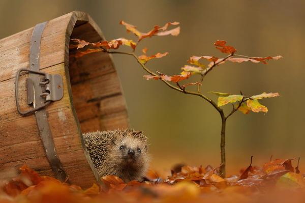 紅葉や秋の森の中を楽しむ動物たちの画像 (8)